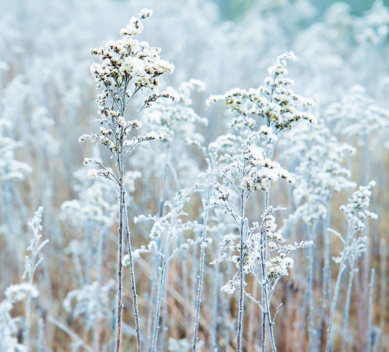 Bevroren de winterweide dicht omhoog royalty-vrije stock afbeelding