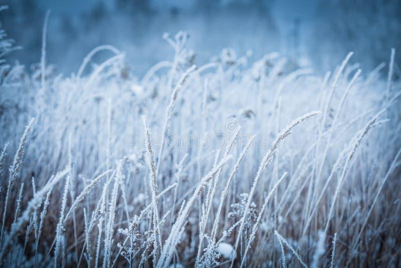 Bevroren de winterweide dicht omhoog - aarddetails royalty-vrije stock foto