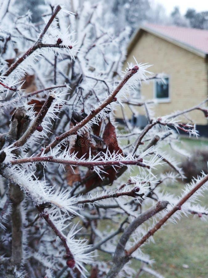 Bevroren die boomtak met vorstrijp op takken bij koude de winterochtend wordt behandeld stock afbeelding