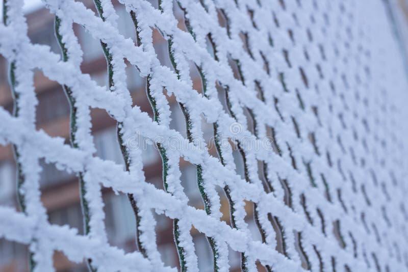 Bevroren die de ruitnet van het metaalijzer met vorst in de winter wordt behandeld stock afbeelding