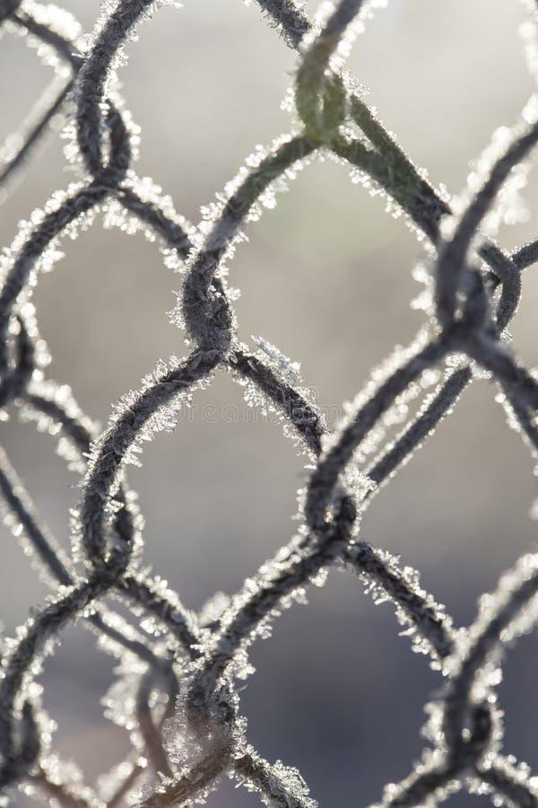 Bevroren die omheining van metaalnetwerk wordt gemaakt met vorstkristallen wordt behandeld, stock fotografie