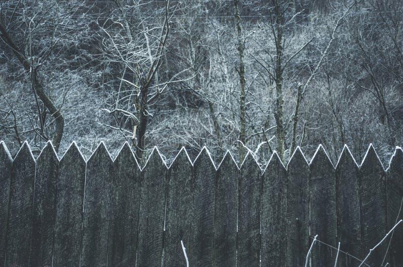 Bevroren Hout stock afbeelding