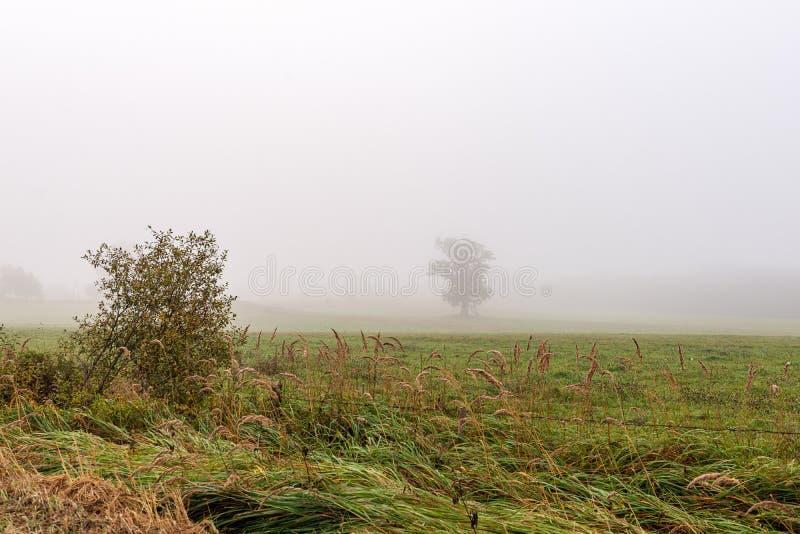 bevroren ijzig gras bents in de recente herfst met de winter komst stock foto's