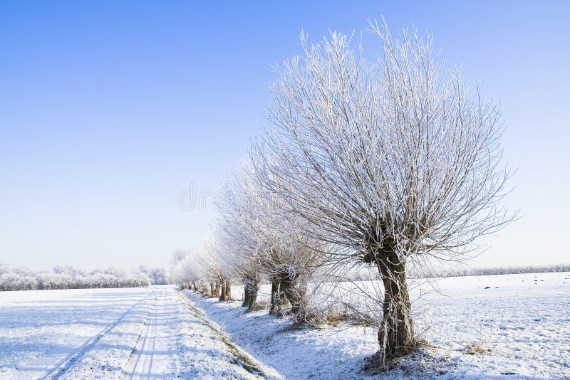 Bevroren landbouwgrond royalty-vrije stock foto