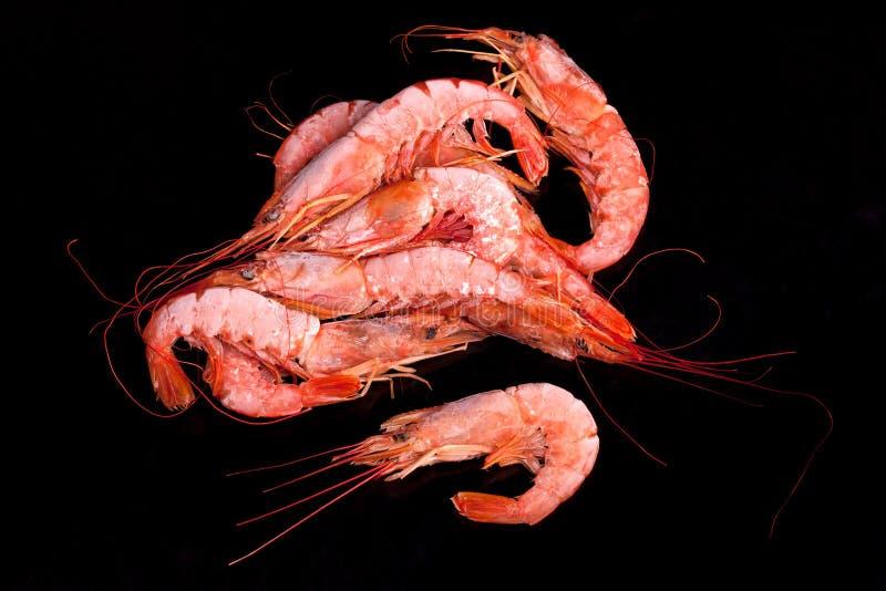 Bevroren Mediterrane Roze Garnalen royalty-vrije stock foto