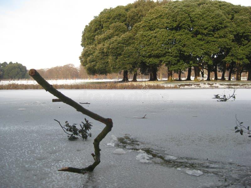 Bevroren meer, sneeuw, het park van Phoenix, Dublin, Ierland, de winter stock foto's