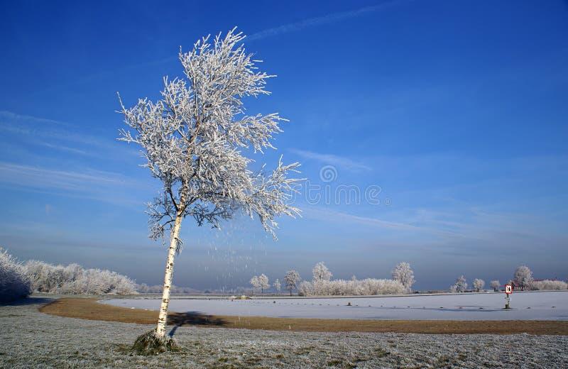 Bevroren mist op een boom stock afbeeldingen