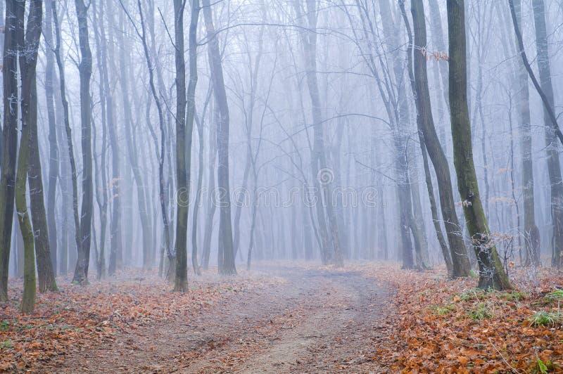 Bevroren mistige ochtend Weg in het de herfstbos royalty-vrije stock afbeeldingen