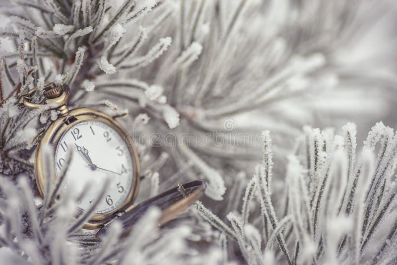 Bevroren naaldtakken met zakhorloge op de witte winter, de winter en gelukkige nieuwe jaarachtergrond royalty-vrije stock foto's