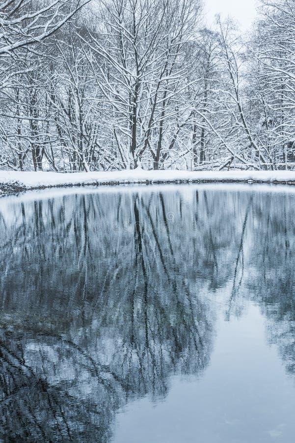 Bevroren niet vijver in de winter stock fotografie