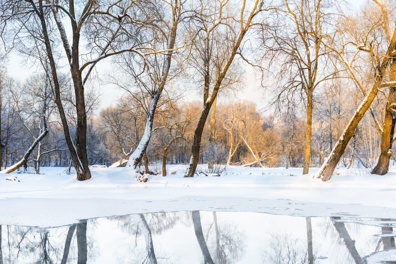 Bevroren niet vijver in de winter royalty-vrije stock afbeelding