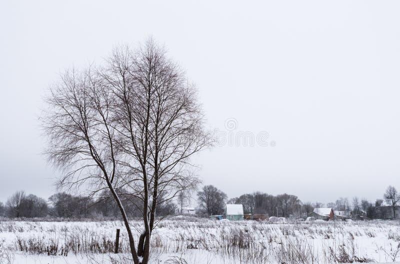 Bevroren niet vijver in de winter royalty-vrije stock afbeeldingen