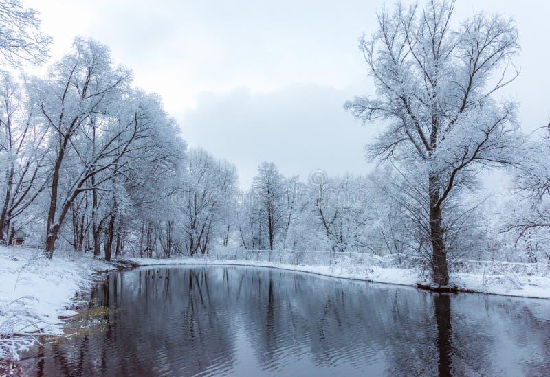 Bevroren niet vijver in de winter stock afbeeldingen