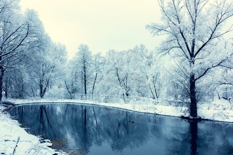 Bevroren niet vijver in de winter royalty-vrije stock fotografie