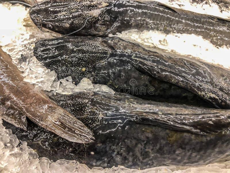 Bevroren overzeese baarzen stock afbeelding