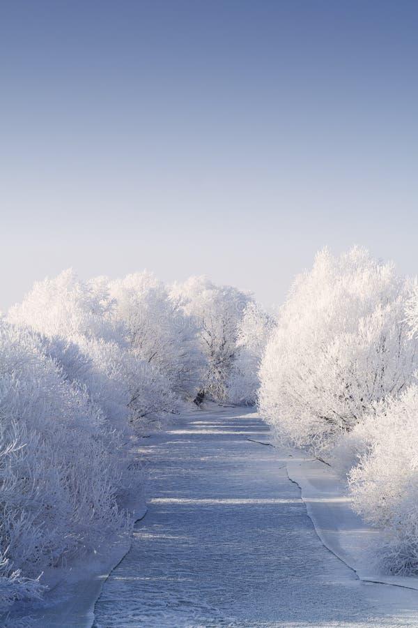 Bevroren rivier met rijpbomen royalty-vrije stock fotografie