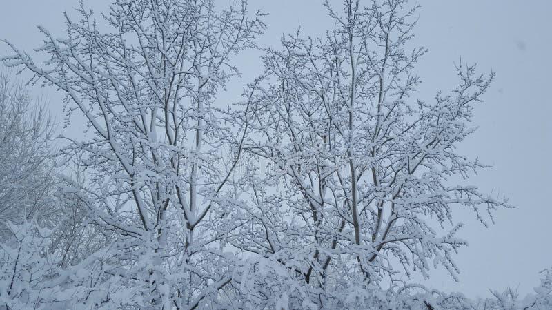 Bevroren sneeuw op bos stock foto