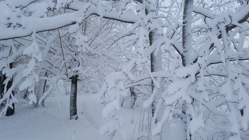Bevroren sneeuw op bos royalty-vrije stock fotografie