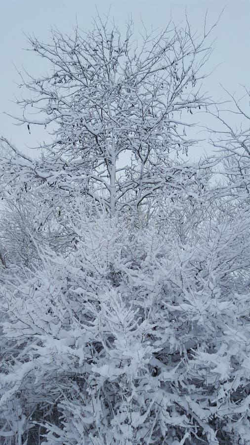 Bevroren sneeuw op bos stock afbeelding
