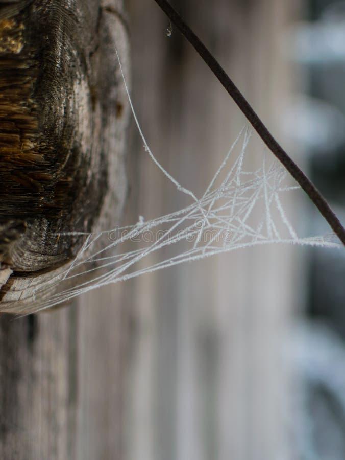 Bevroren spiderweb in de winter royalty-vrije stock foto's