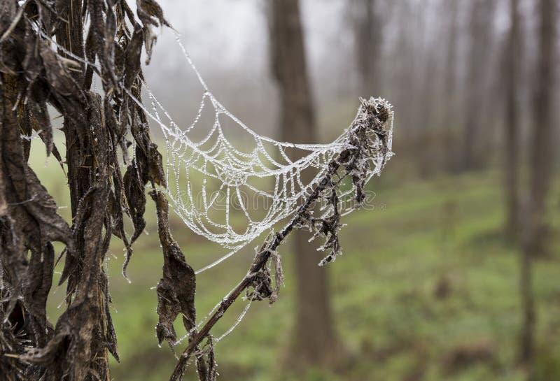 Bevroren Spinneweb stock afbeelding