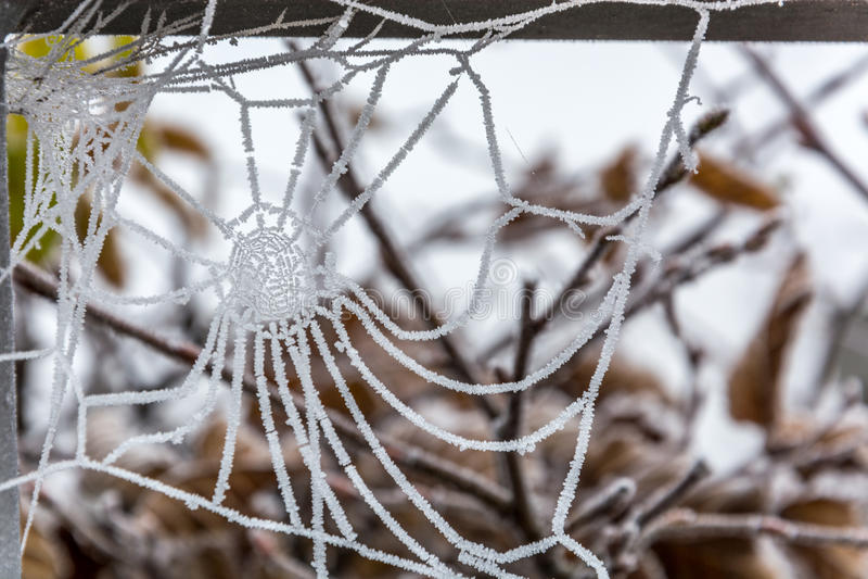 Bevroren spinneweb op een koude ochtend royalty-vrije stock foto's