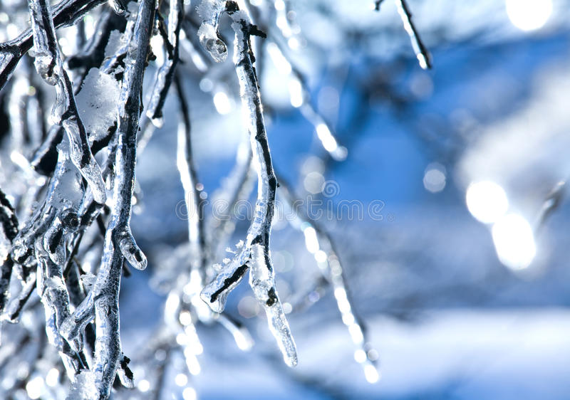 Bevroren tak - ijs stock foto's