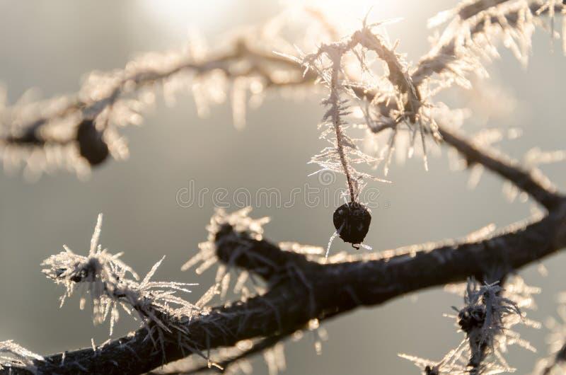 Bevroren takken in zonlicht royalty-vrije stock afbeeldingen