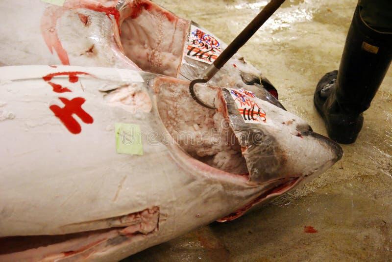 Bevroren tonijnen in ochtendveiling bij vissenmarkt stock afbeelding