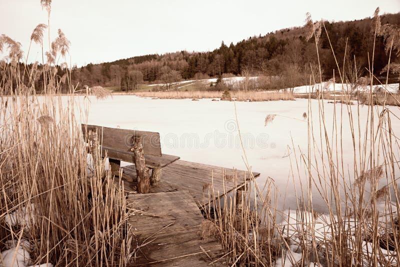 Bevroren vijver in de bos, houten bank bij promenade stock afbeelding