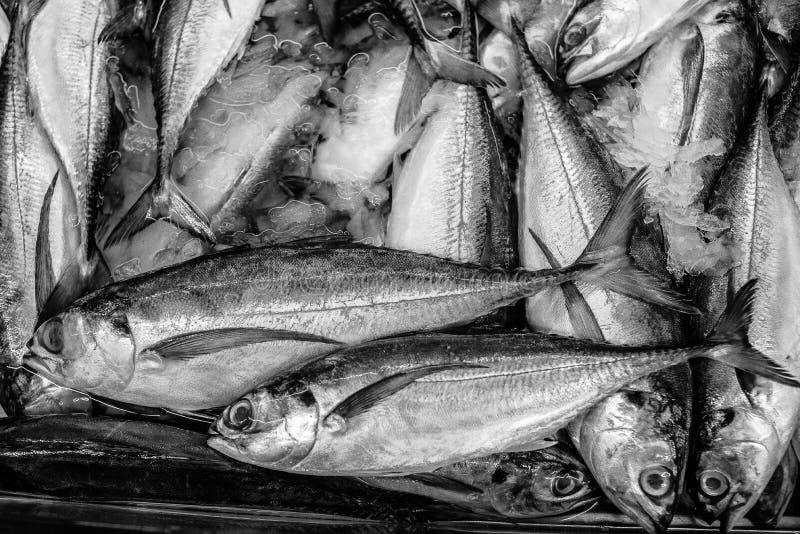 BEVROREN vissen stock foto's