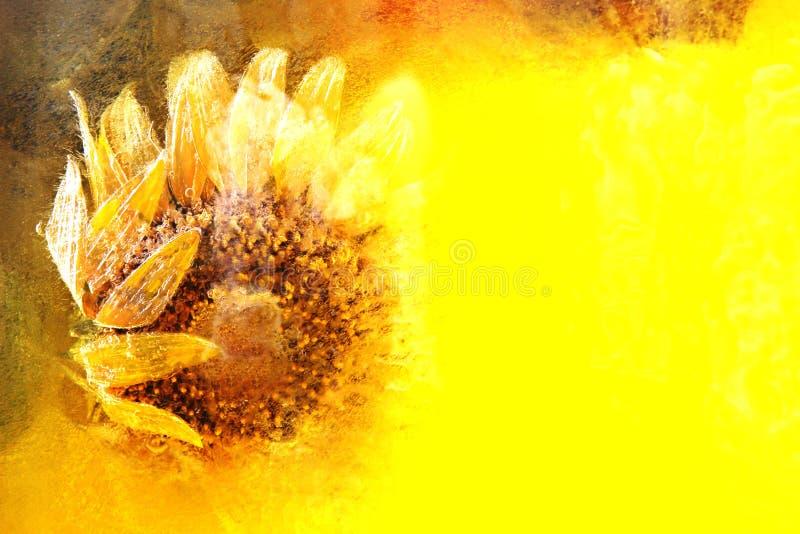 Bevroren zonnebloem stock foto's