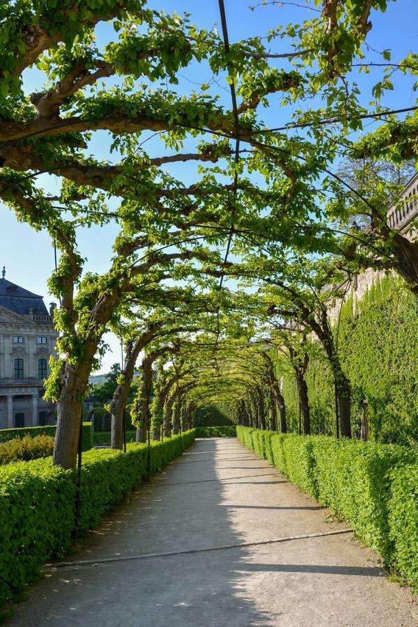 Bevuxen gångbana i borggårdträdgården av den Wuerzburg residen arkivfoton