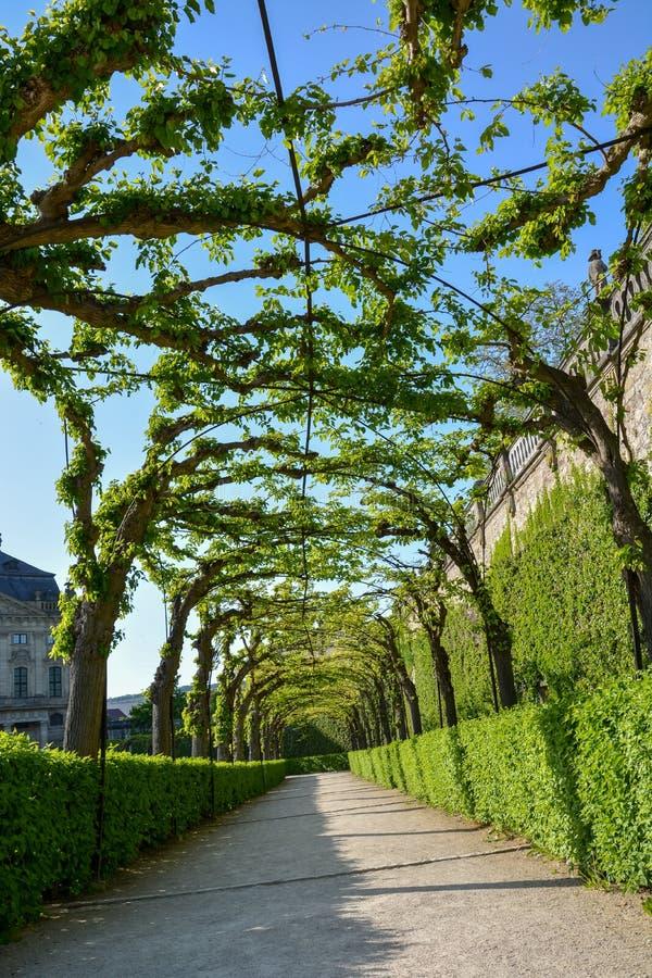 Bevuxen gångbana i borggårdträdgården av den Wuerzburg residen arkivfoto