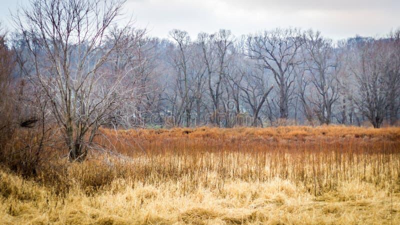 Bevuxen golfbana med den illavarslande skogen arkivbild