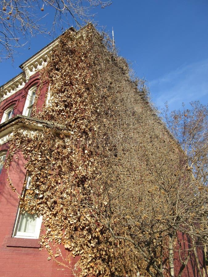 Bevuxet Georgetown hus royaltyfri fotografi