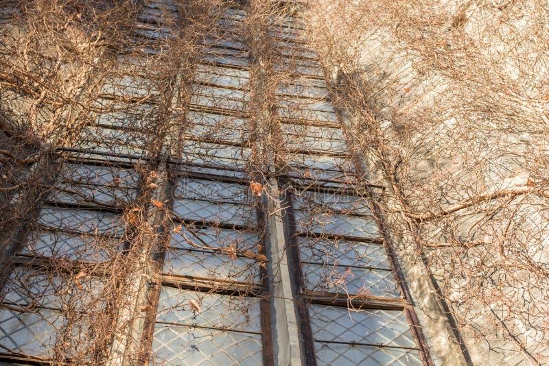 Bevuxet kyrkligt fönster i detalj arkivbild