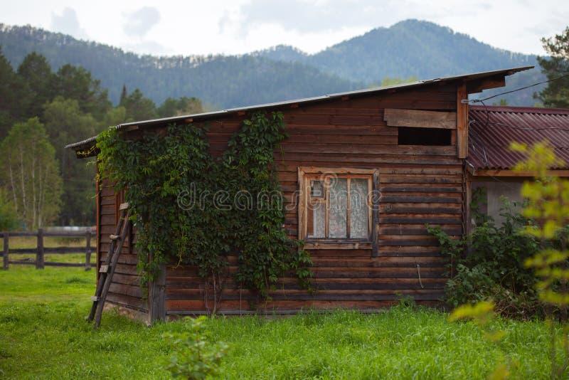 Bevuxet litet wood hus i det Altai berget royaltyfri foto