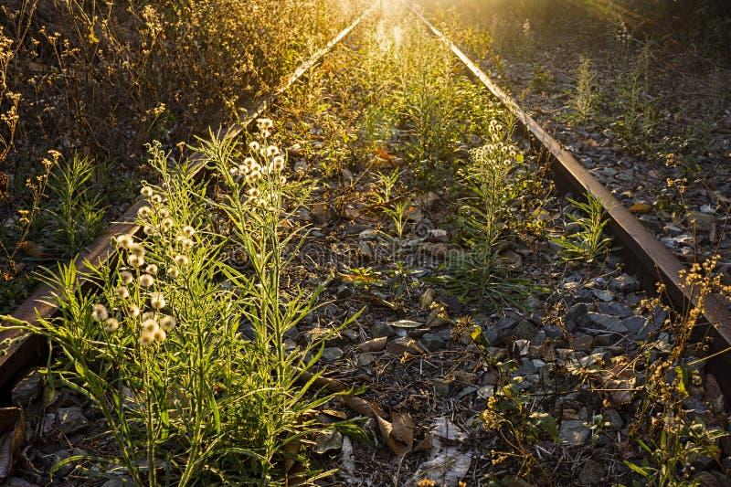 Bevuxna övergav järnvägsspår på solnedgången arkivbilder