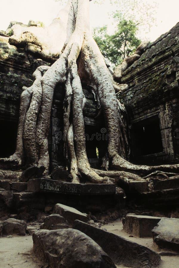 bevuxna cambodia fördärvar royaltyfria foton