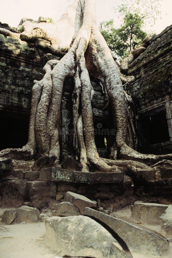 bevuxna cambodia fördärvar fotografering för bildbyråer