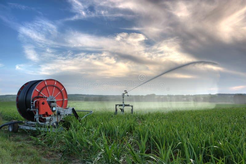 Bewässerung lizenzfreies stockfoto