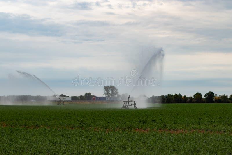 Bewässerung auf einem Feld während eines trockenen Sommers stockfotografie