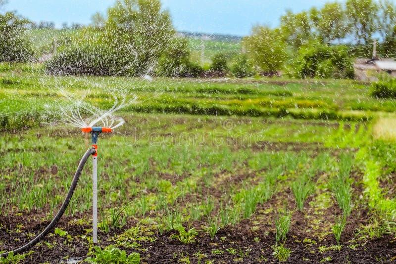 Bewässerung des Gartens unter Verwendung einer Rotationsberieselungsanlage lizenzfreies stockbild