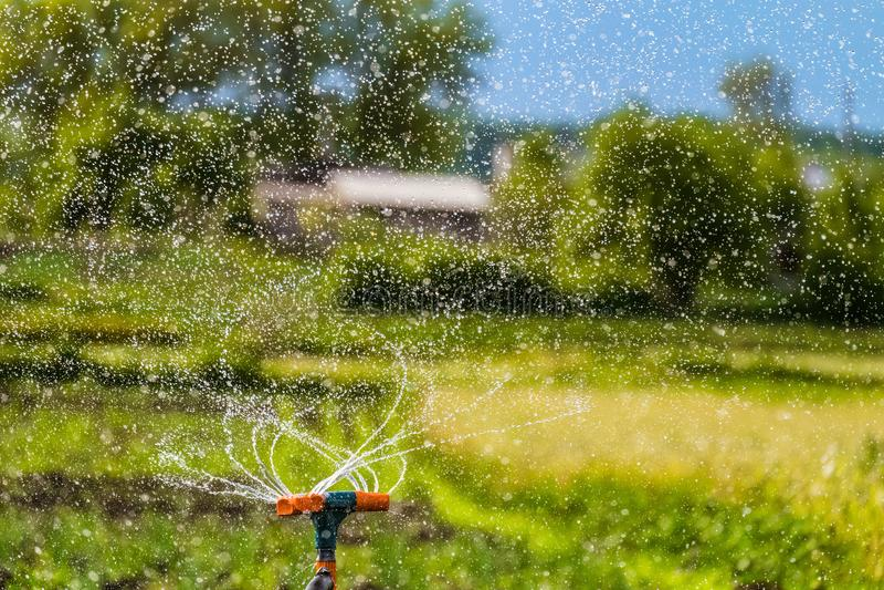 Bewässerung des Gartens unter Verwendung einer Rotationsberieselungsanlage lizenzfreie stockfotos