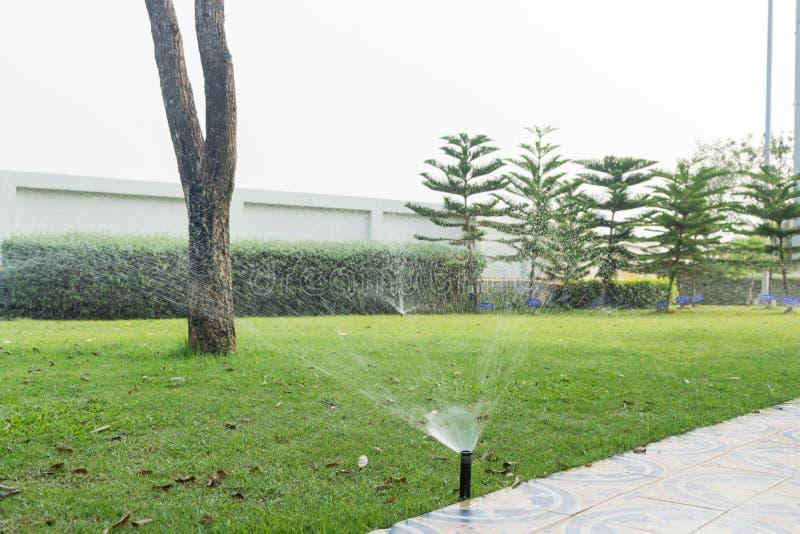 Bewässerung des Rasens stockfotos