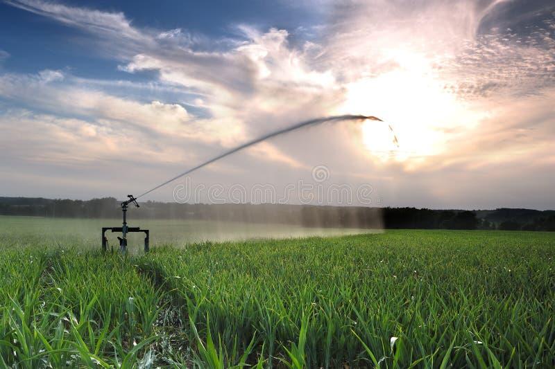Bewässerung drei lizenzfreie stockfotografie