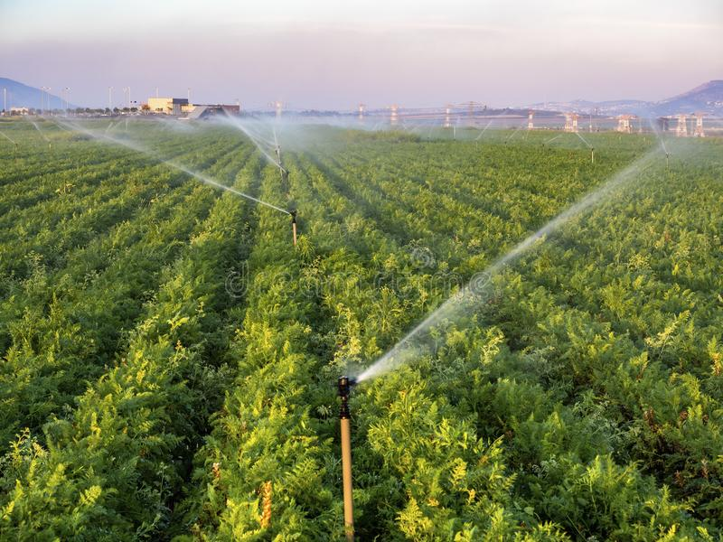 Bewässerung eines Feldes der Ernten bei Sonnenuntergang im Sommer israel lizenzfreie stockfotos