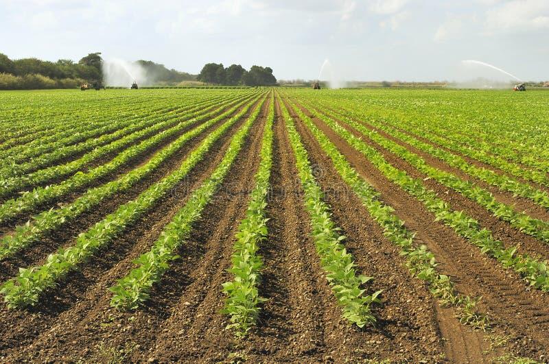 Bewässerung-Feld lizenzfreie stockfotografie
