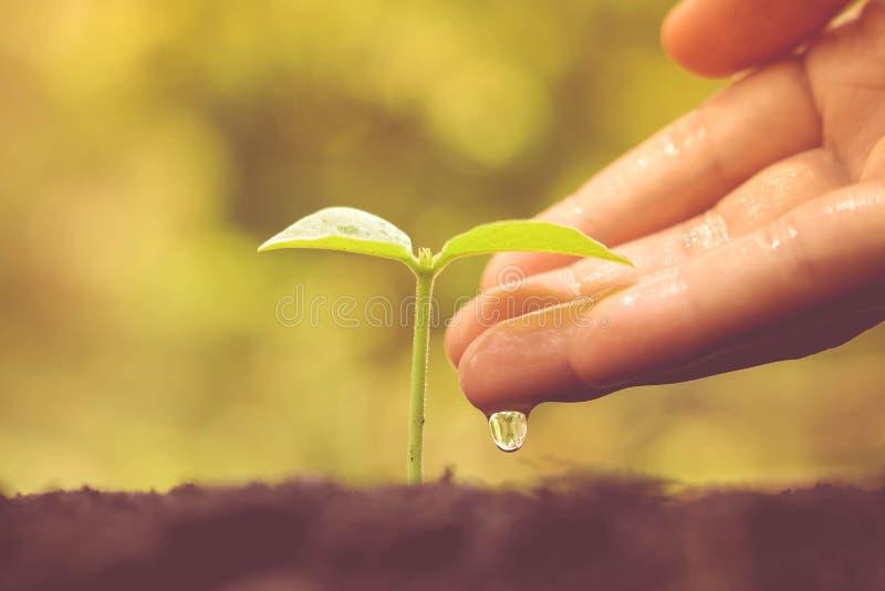 Bewässerungsanlage stockfotos